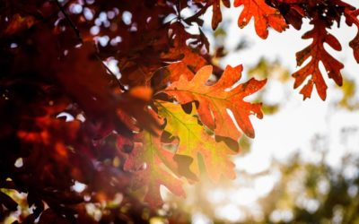 5 Fun Fall Festivities for Families in East Tennessee